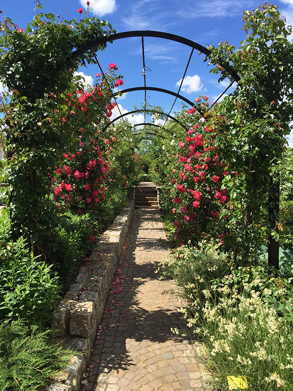 Garden-Archway-Metal.-St-Albans-Walkway.-A-Rose-Pergola-by-Classic-Garden-Elements.-Hot-dip-galvanised.-Best-quality.-10-years-guarantee-on-rust.-Bespoke-items-made-photo-1