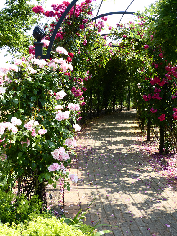 Garden-Archway-Metal.-St-Albans-Walkway.-A-Rose-Pergola-by-Classic-Garden-Elements.-Hot-dip-galvanised.-Best-quality.-10-years-guarantee-on-rust.-Bespoke-items-made-photo-4