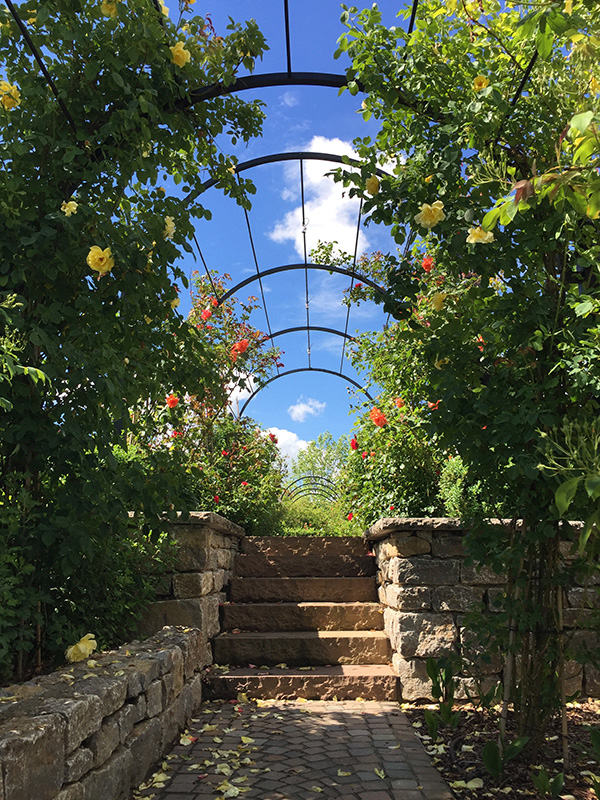 Garden-Archway-Metal.-St-Albans-Walkway.-A-Rose-Pergola-by-Classic-Garden-Elements.-Hot-dip-galvanised.-Best-quality.-10-years-guarantee-on-rust.-Bespoke-items-made-photo-8