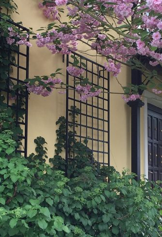 Wall mounted trellis with climbing hydrangea