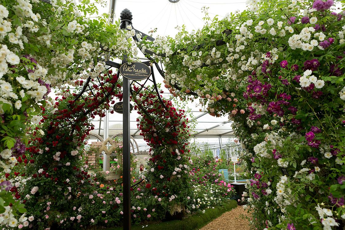 Rhs chelsea flower show classic garden elements uk - Chelsea garden show ...