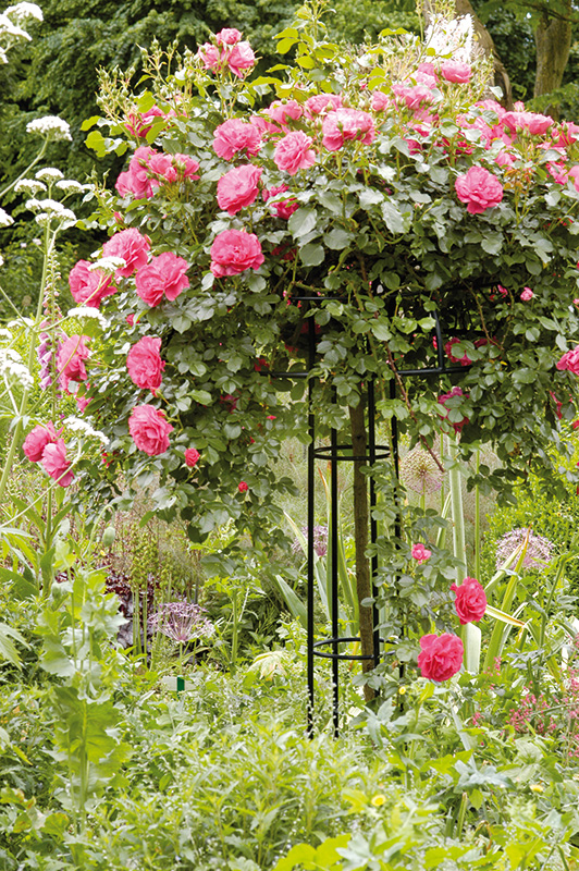 rose obelisk