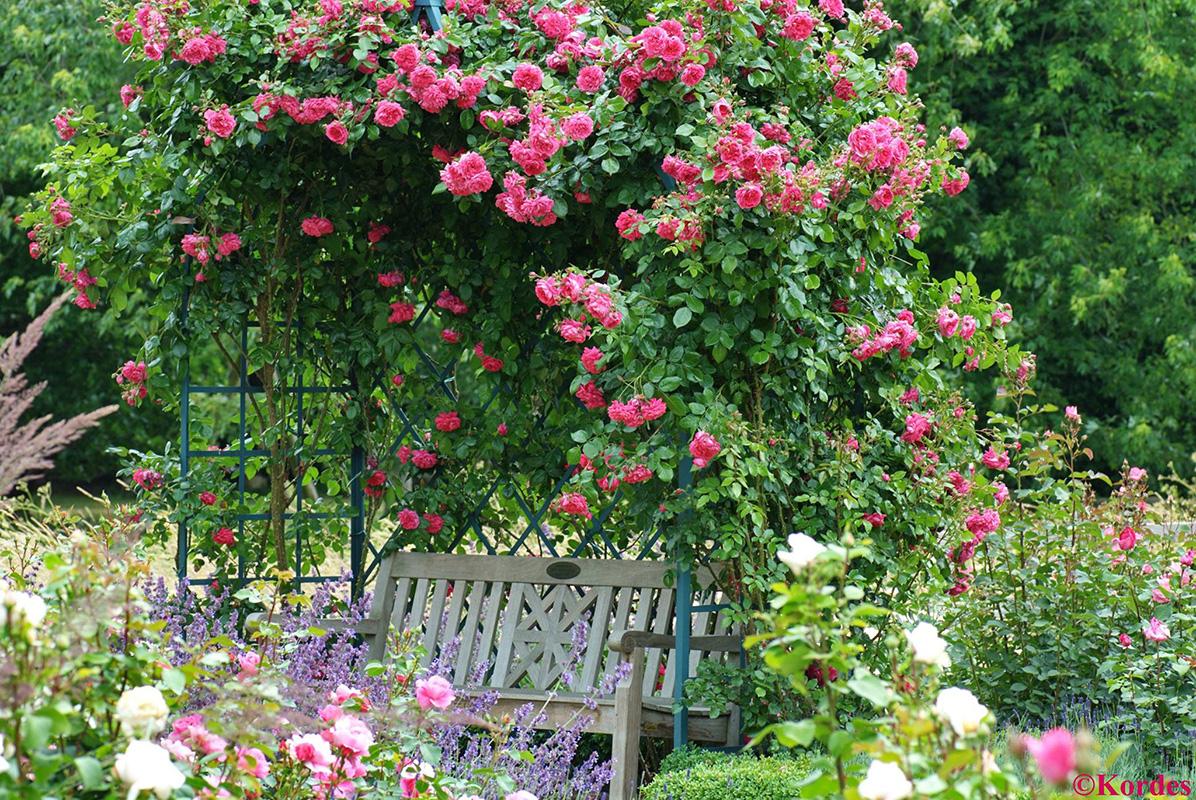 Roses In Garden: Classic Garden Elements USA