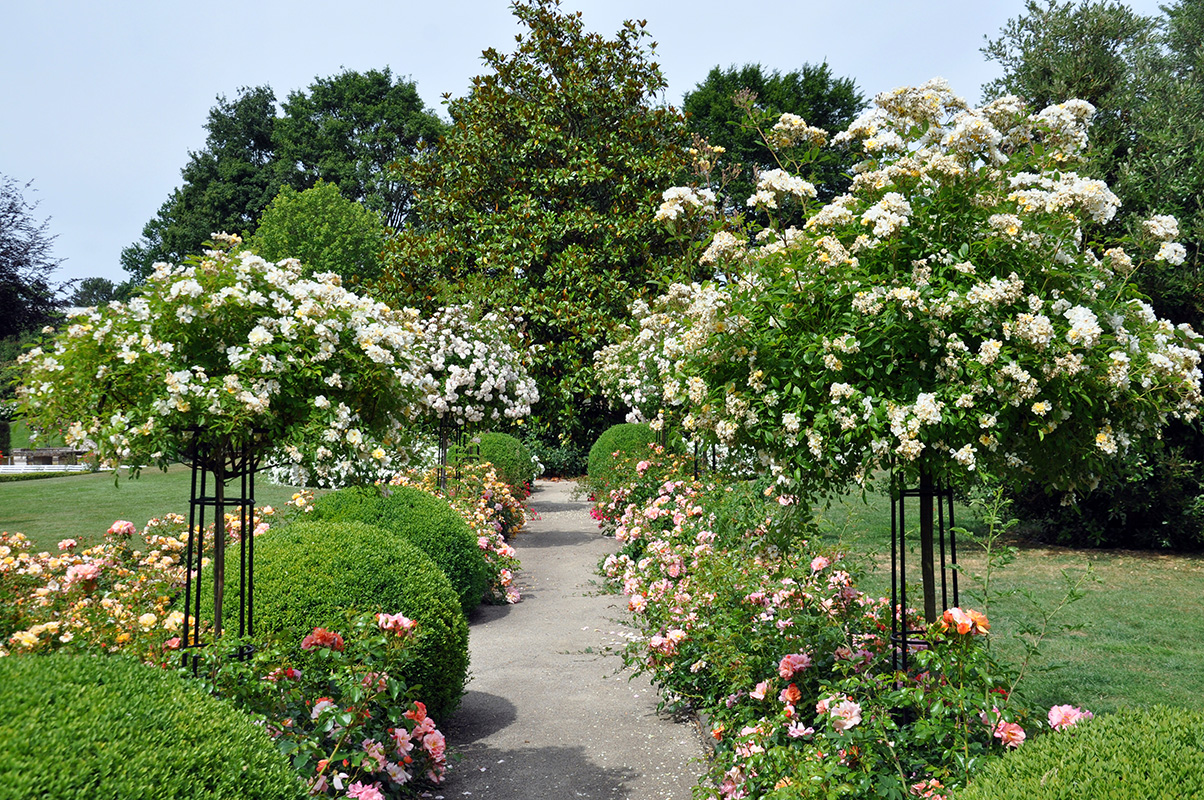 Roses In Garden: Classic Garden Elements UK