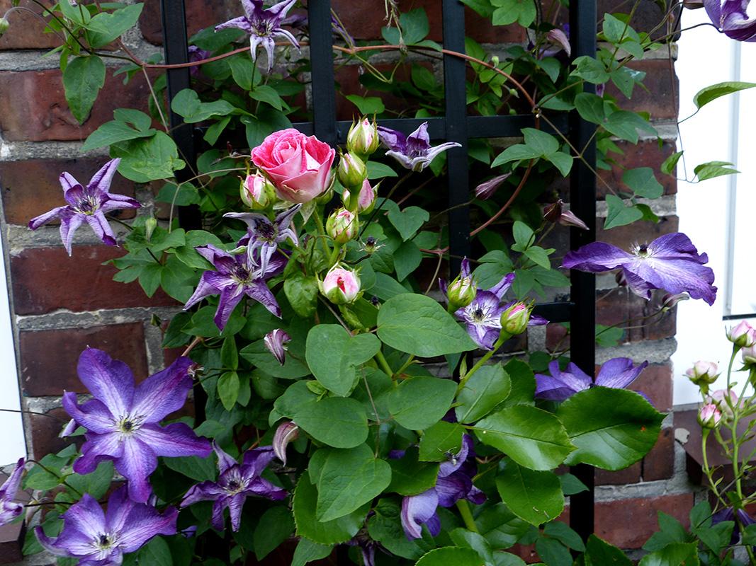Espalier Trellis Classic Garden Elements Usa