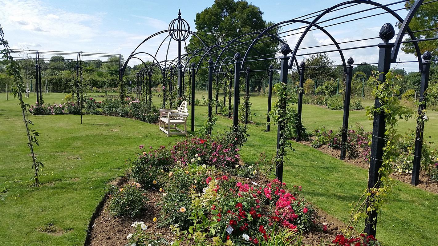 Garden Archways for roses in Attleborough
