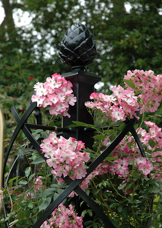 obelisk for climbing roses