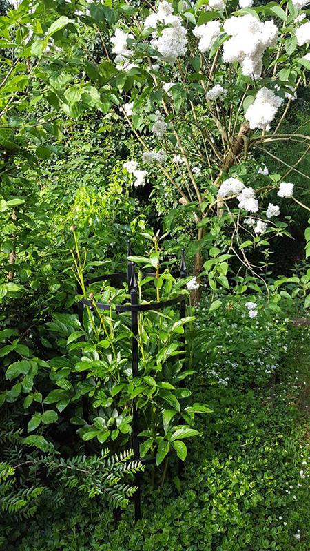 garden plant supports