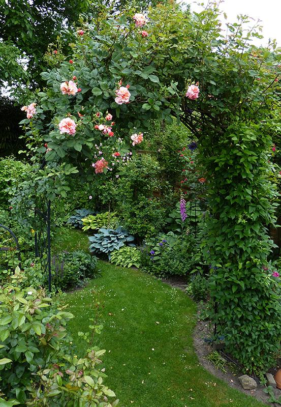 metal garden arch