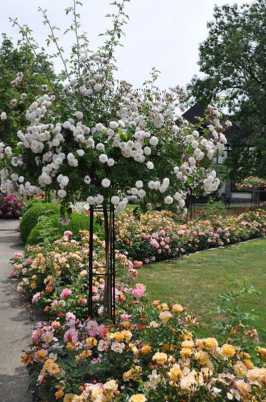 giverny rose umbrella classic garden elements uk
