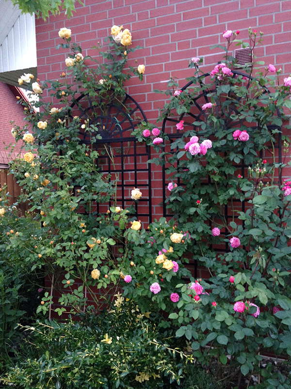 Treillage Wall Trellis Classic Garden Elements Usa