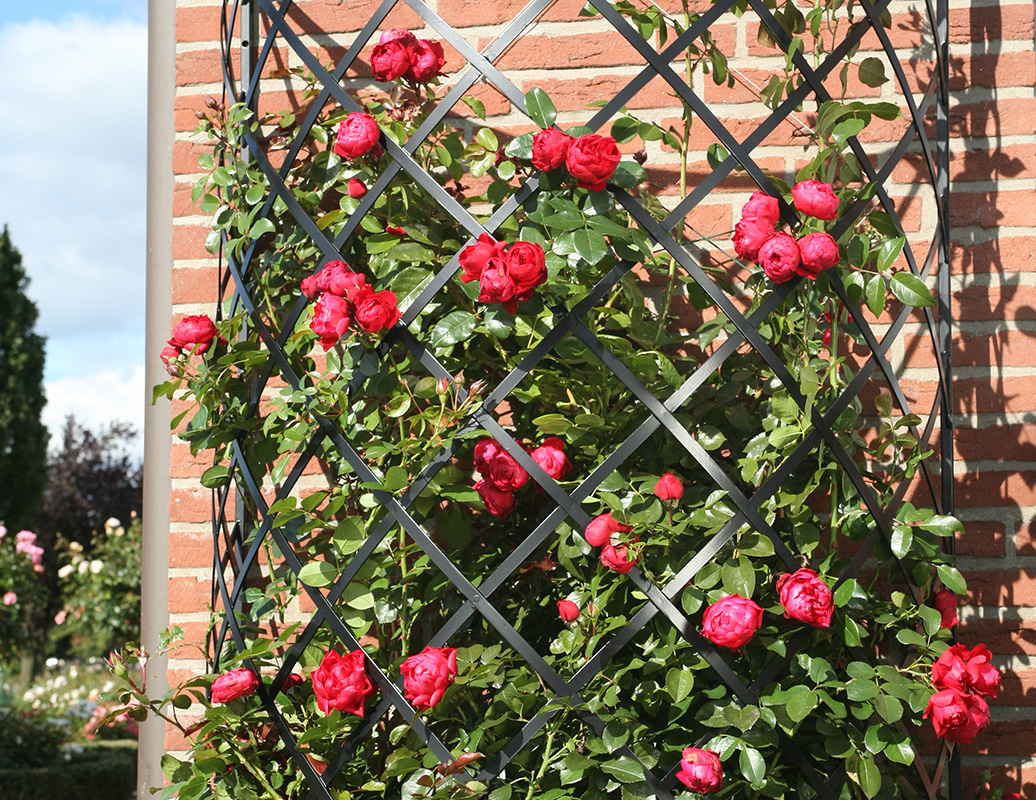 Exedra Halfround Trellis Classic Garden Elements Uk