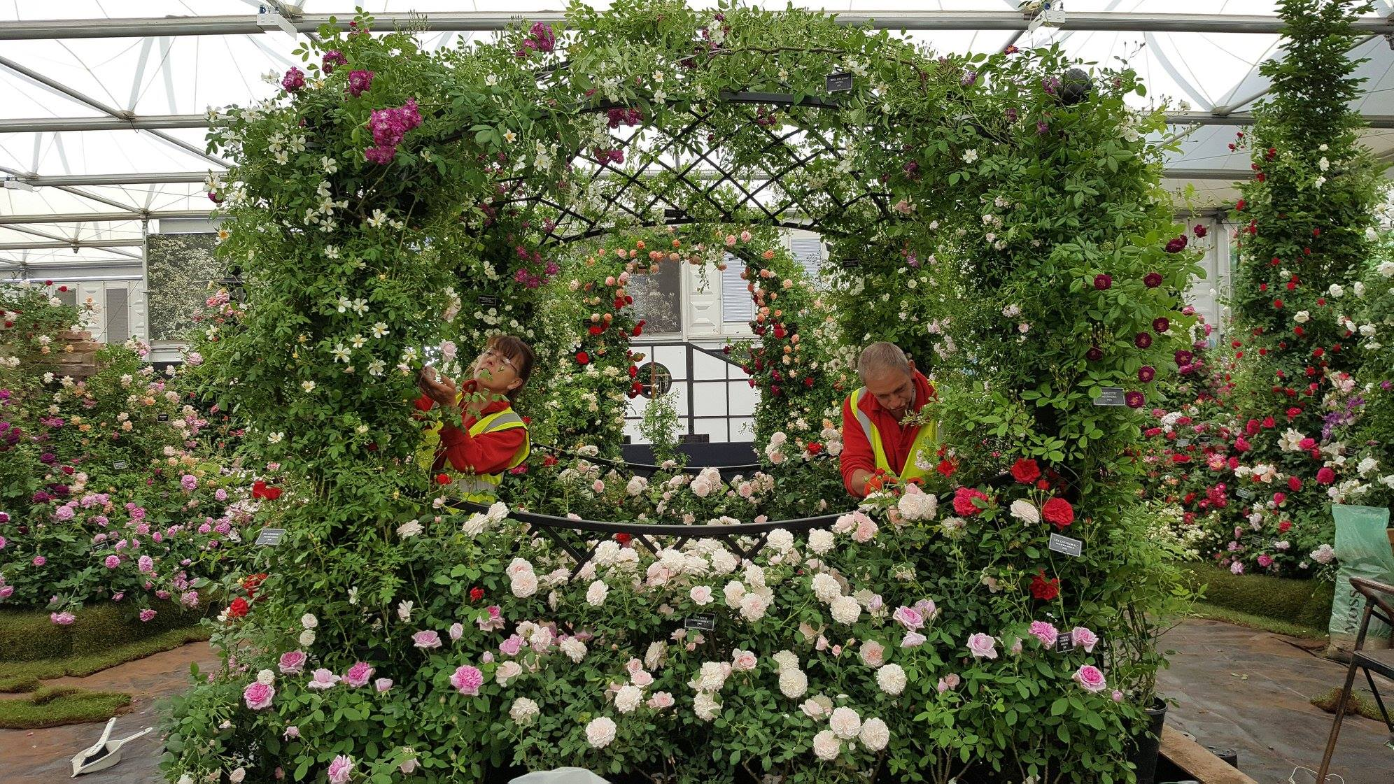 Chelsea Flower Show 2018-Day5-1