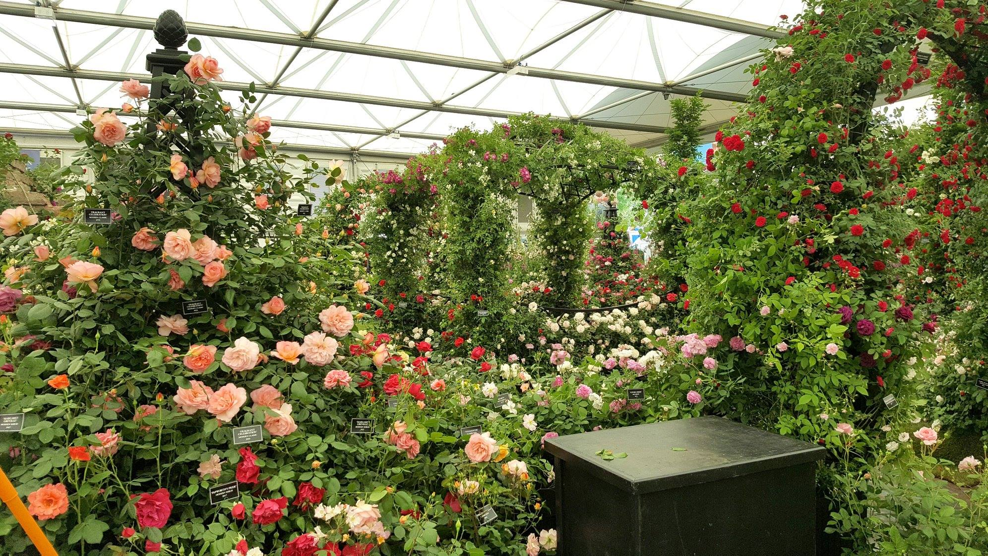 Chelsea Flower Show 2018-Day5-2