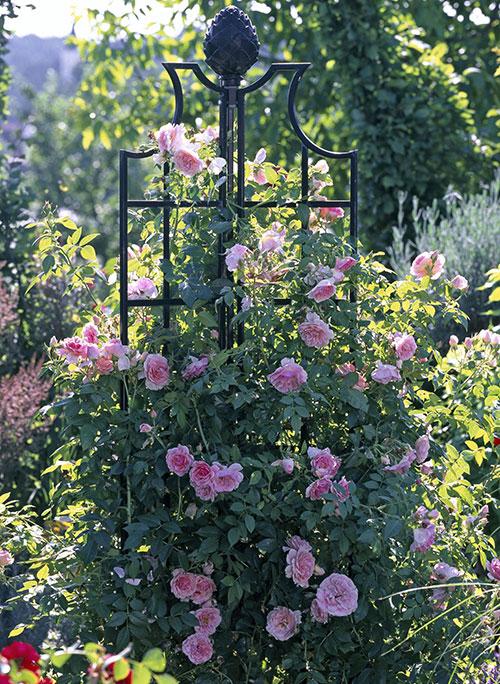 rose-obelisk