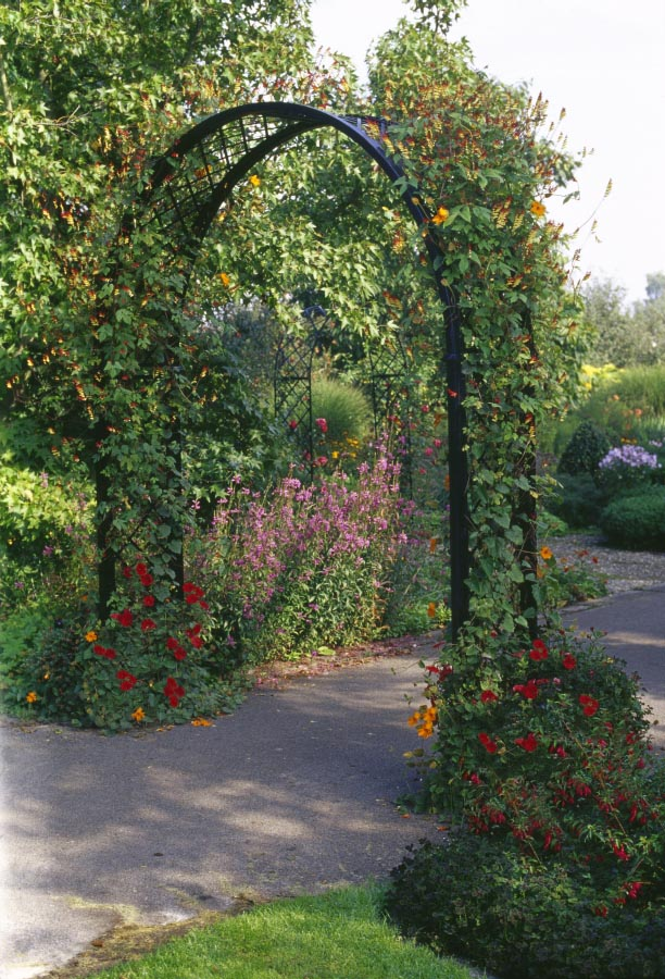 Metal Round Top Garden Arch 'Portofino' Design covered in morning glories