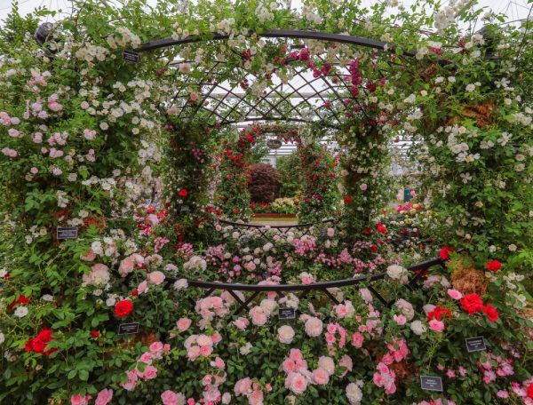 Buscot Park Wedding Gazebo covered in roses