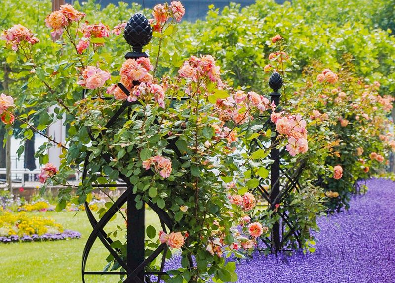 Garden Obelisks - Rose Obelisks - Pyramid Garden Obelisks