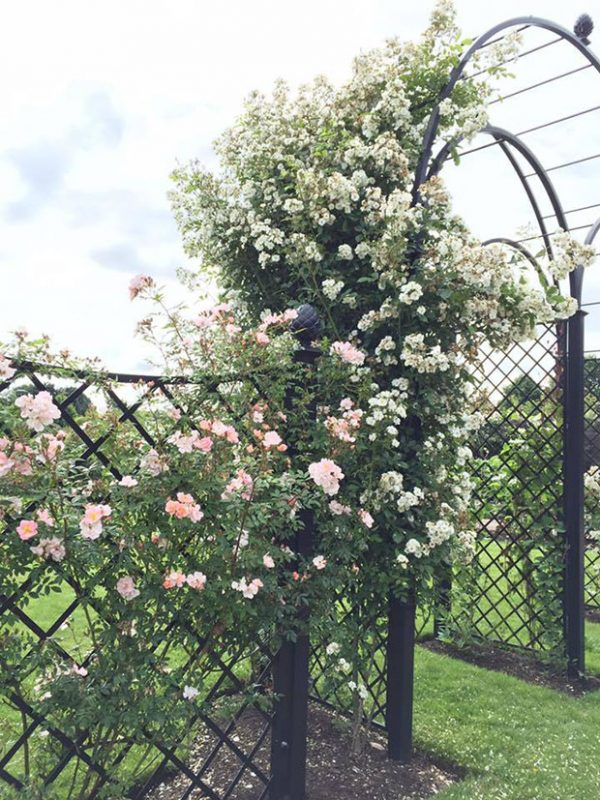 R5-WA-P Triple Wedding Arch covered in Roses